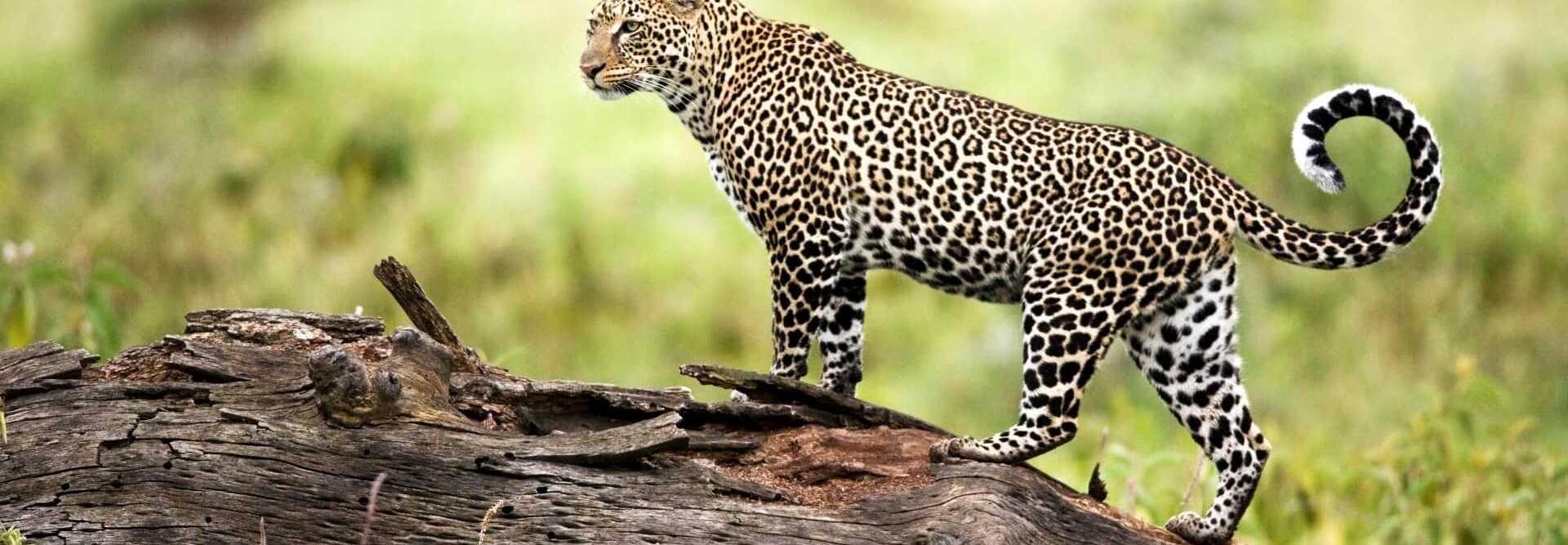National Parks / Wild life / Flora and Fauna