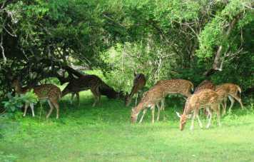 Sri Lanka Culture & Wild Life Tour 4 Days 3 Nights