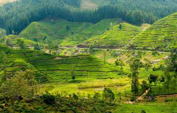 Tea Trails Tour For 5 Days 4 Nights